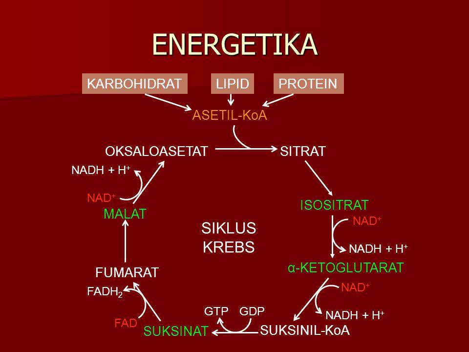 ENERGETIKA SUKSINIL-KoA KARBOHIDRATLIPIDPROTEIN ASETIL-KoA OKSALOASETATSITRAT ISOSITRAT α-KETOGLUTARAT MALAT SUKSINAT FUMARAT NAD + NADH + H + FAD FAD