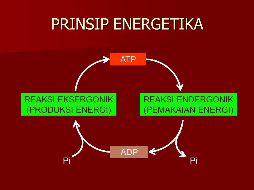 PRINSIP ENERGETIKA REAKSI ENDERGONIK (PEMAKAIAN ENERGI) REAKSI EKSERGONIK (PRODUKSI ENERGI) ATP ADP Pi