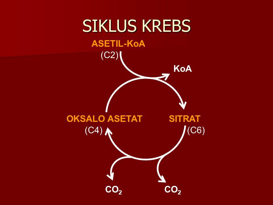 SIKLUS KREBS OKSALO ASETATSITRAT ASETIL-KoA KoA CO 2 (C4)(C6) (C2)