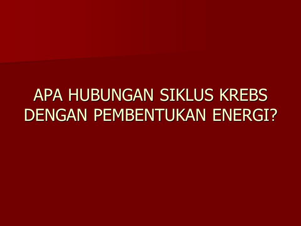 APA HUBUNGAN SIKLUS KREBS DENGAN PEMBENTUKAN ENERGI?