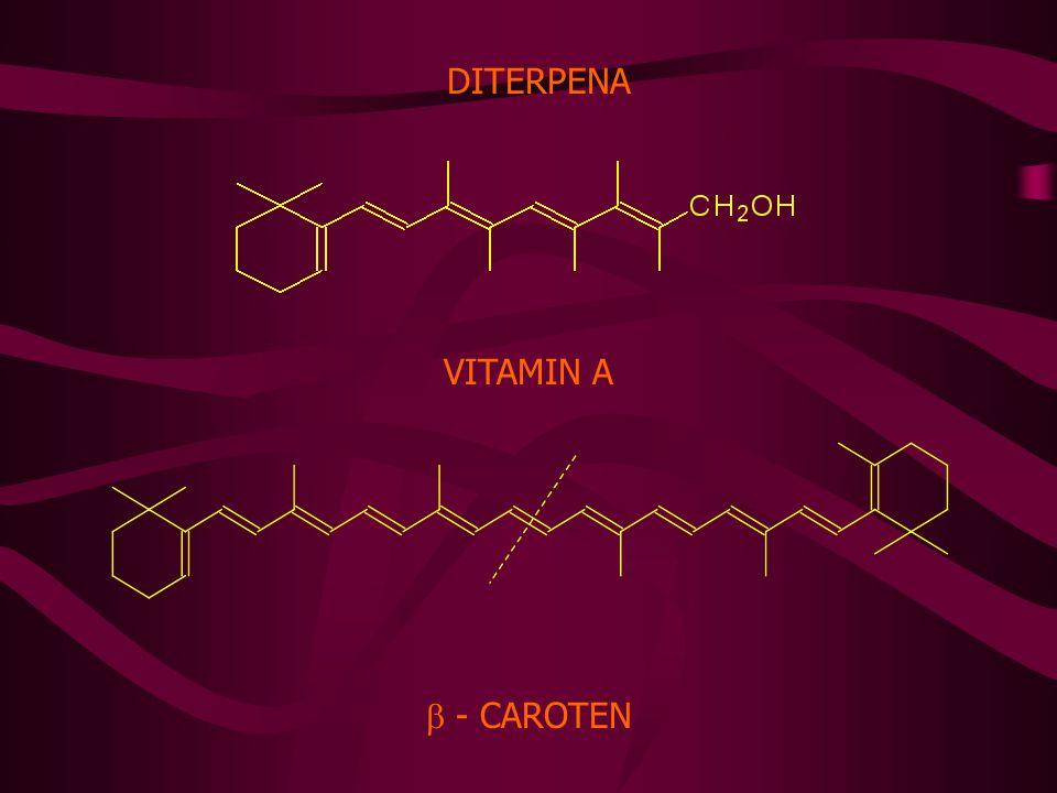 DITERPENA VITAMIN A  - CAROTEN