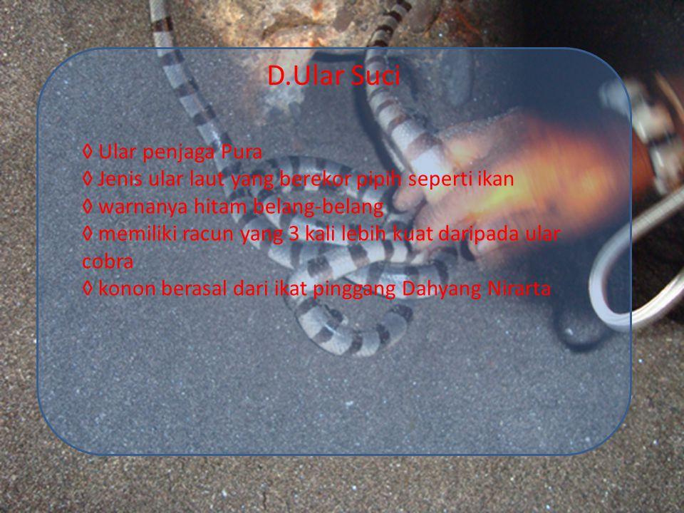 D.Ular Suci ◊ Ular penjaga Pura ◊ Jenis ular laut yang berekor pipih seperti ikan ◊ warnanya hitam belang-belang ◊ memiliki racun yang 3 kali lebih ku