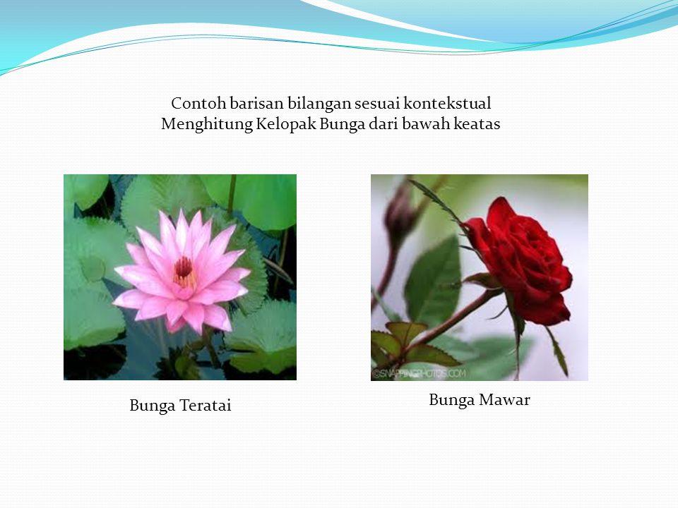 Contoh barisan bilangan sesuai kontekstual Menghitung Kelopak Bunga dari bawah keatas Bunga Teratai Bunga Mawar