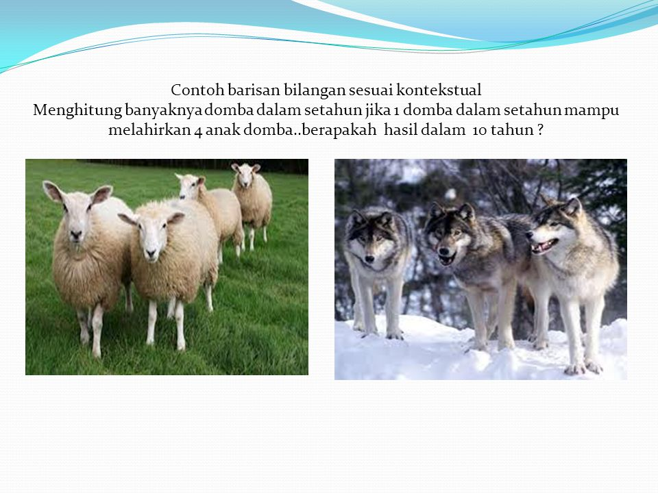 Contoh barisan bilangan sesuai kontekstual Menghitung banyaknya domba dalam setahun jika 1 domba dalam setahun mampu melahirkan 4 anak domba..berapaka