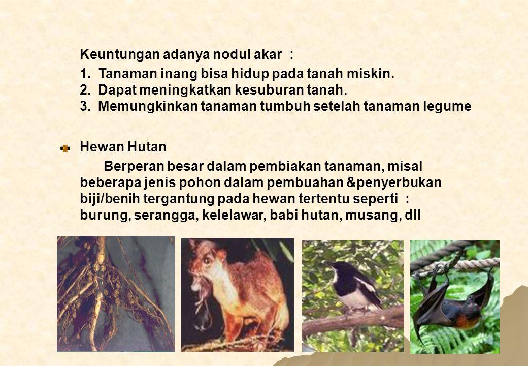 14 Keuntungan adanya nodul akar : 1.Tanaman inang bisa hidup pada tanah miskin.