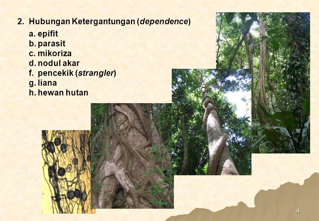 4 a.epifit b.parasit c.mikoriza d.nodul akar f.pencekik (strangler) g.liana h.hewan hutan 2.