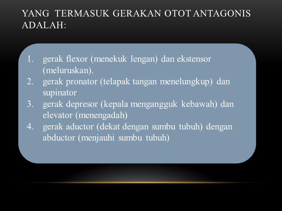 YANG TERMASUK GERAKAN OTOT ANTAGONIS ADALAH: 1.gerak flexor (menekuk lengan) dan ekstensor (meluruskan).