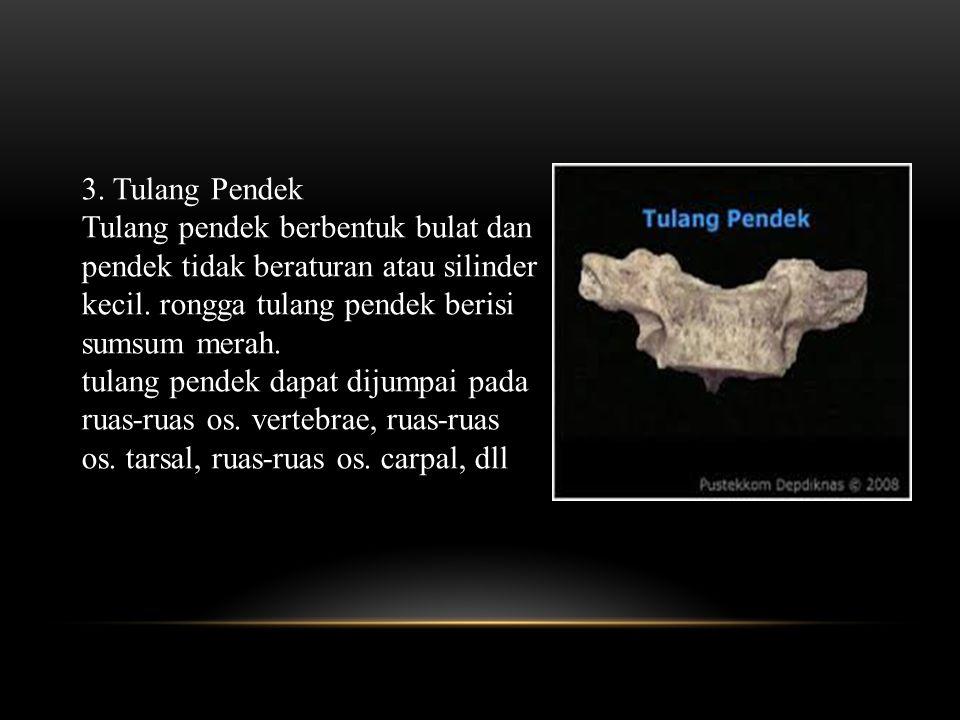 3.Tulang Pendek Tulang pendek berbentuk bulat dan pendek tidak beraturan atau silinder kecil.