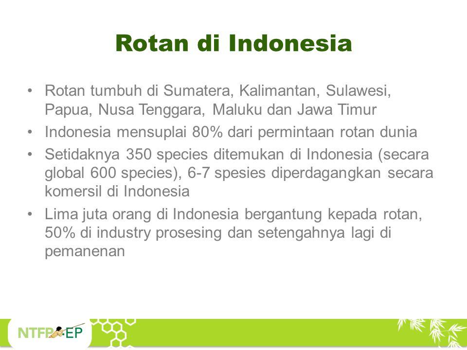 Jenis Rotan yang Utama Sulawesi: Rotan liar (diameter besar); Calamus inops, Calamus zollingeri, Calamus ahliduri, Daemonorops sarasinorum, Calamus omatus, Calamus sp.