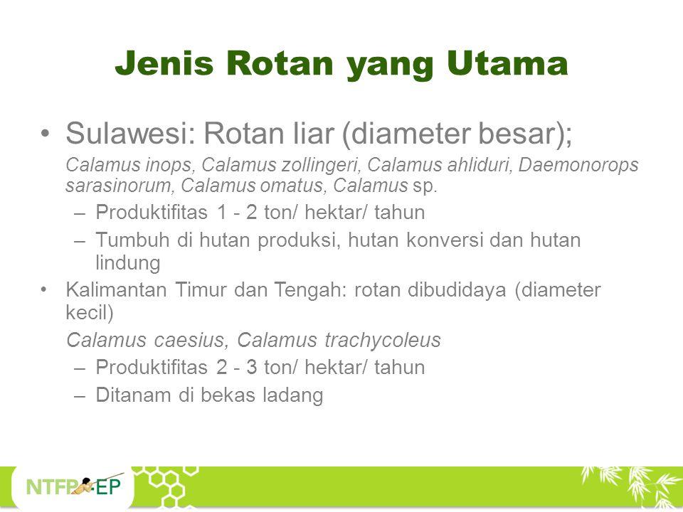 Jenis Rotan yang Utama Sulawesi: Rotan liar (diameter besar); Calamus inops, Calamus zollingeri, Calamus ahliduri, Daemonorops sarasinorum, Calamus om
