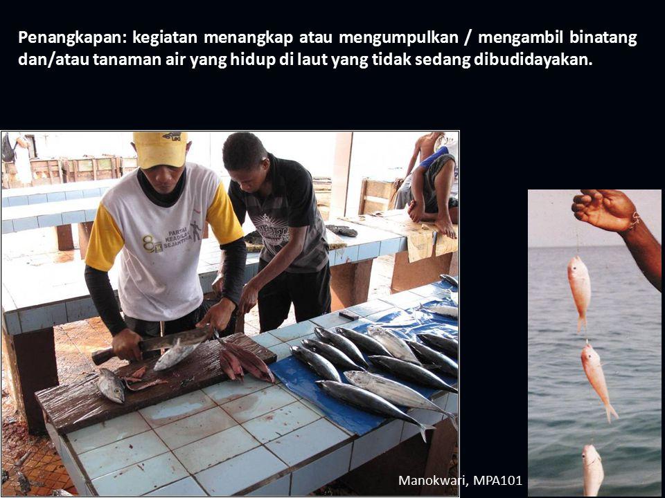 Manokwari, MPA101 Penangkapan: kegiatan menangkap atau mengumpulkan / mengambil binatang dan/atau tanaman air yang hidup di laut yang tidak sedang dib