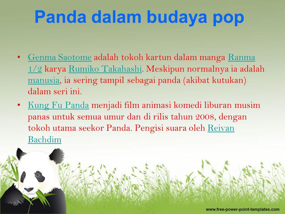Fakta Unik Panda Panda merupakan hewan mamalia yang masih satu keluarga sama beruang dan panda merah.