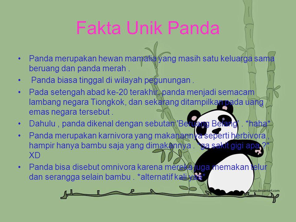 Fakta Unik Panda Panda merupakan hewan mamalia yang masih satu keluarga sama beruang dan panda merah. Panda biasa tinggal di wilayah pegunungan. Pada
