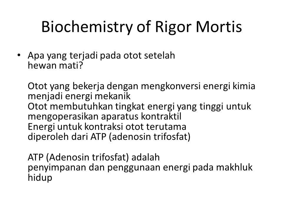 Biochemistry of Rigor Mortis Rendah tingkat ATP dalam otot adalah apa pemicu onset rigor mortis Hidup otot: ATP yang diperoleh terutama dari pernafasan Hewan disembelih: Penghentian sirkulasi Perkembangan kondisi anaerobik (perampasan oksigen - respirasi di tidak lagi terjadi).