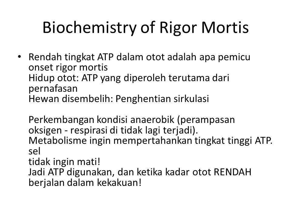 Biochemistry of Rigor Mortis Rendah tingkat ATP dalam otot adalah apa pemicu onset rigor mortis Hidup otot: ATP yang diperoleh terutama dari pernafasa