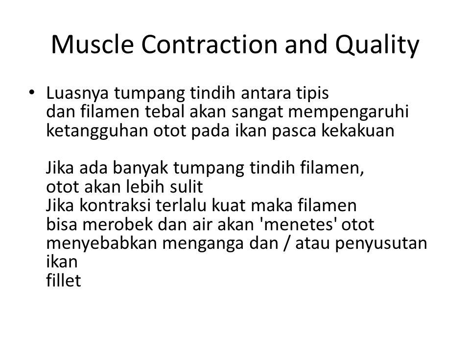 Muscle Contraction and Quality Luasnya tumpang tindih antara tipis dan filamen tebal akan sangat mempengaruhi ketangguhan otot pada ikan pasca kekakua