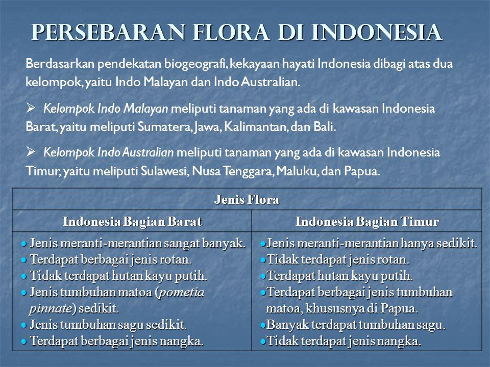 PERSEBARAN FLORA DI INDONESIA Berdasarkan pendekatan biogeografi, kekayaan hayati Indonesia dibagi atas dua kelompok, yaitu Indo Malayan dan Indo Aust