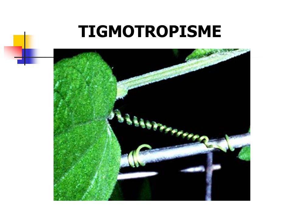 TIGMOTROPISME