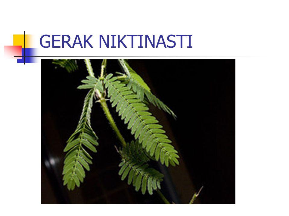 GERAK NIKTINASTI
