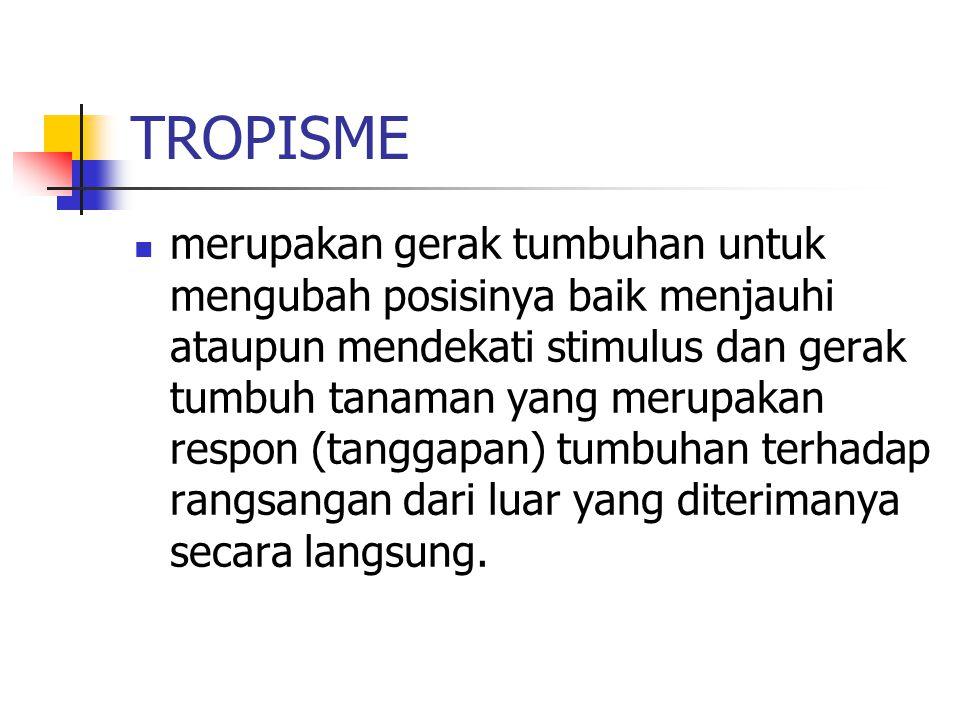 MACAM GERAK TROPISME fototropisme, hidrotropisme, tigmotropisme, geotropisme