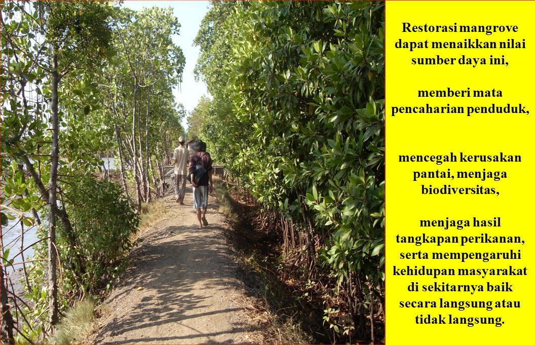 MANAGEMENT GUIDELINES: Mangrove Forestry 1.