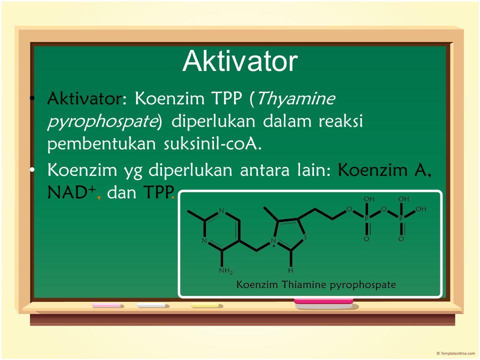 Aktivator Aktivator: Koenzim TPP (Thyamine pyrophospate) diperlukan dalam reaksi pembentukan suksinil-coA. Koenzim yg diperlukan antara lain: Koenzim