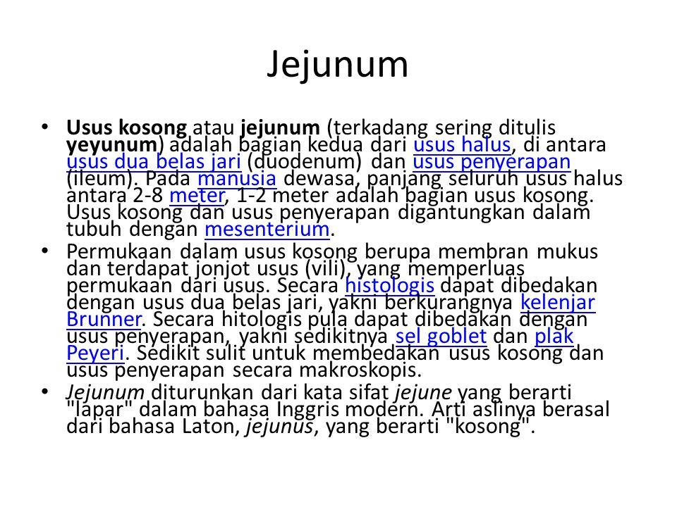Jejunum Usus kosong atau jejunum (terkadang sering ditulis yeyunum) adalah bagian kedua dari usus halus, di antara usus dua belas jari (duodenum) dan