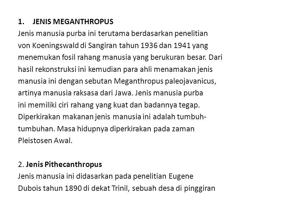 1.JENIS MEGANTHROPUS Jenis manusia purba ini terutama berdasarkan penelitian von Koeningswald di Sangiran tahun 1936 dan 1941 yang menemukan fosil rah