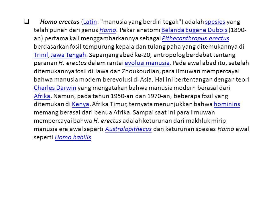  Homo erectus (Latin:
