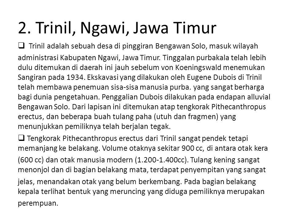 2. Trinil, Ngawi, Jawa Timur  Trinil adalah sebuah desa di pinggiran Bengawan Solo, masuk wilayah administrasi Kabupaten Ngawi, Jawa Timur. Tinggalan