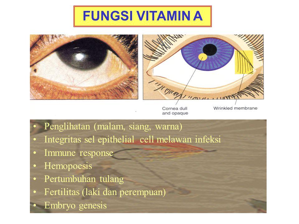 Penglihatan (malam, siang, warna) Integritas sel epithelial cell melawan infeksi Immune response Hemopoesis Pertumbuhan tulang Fertilitas (laki dan perempuan) Embryo genesis FUNGSI VITAMIN A
