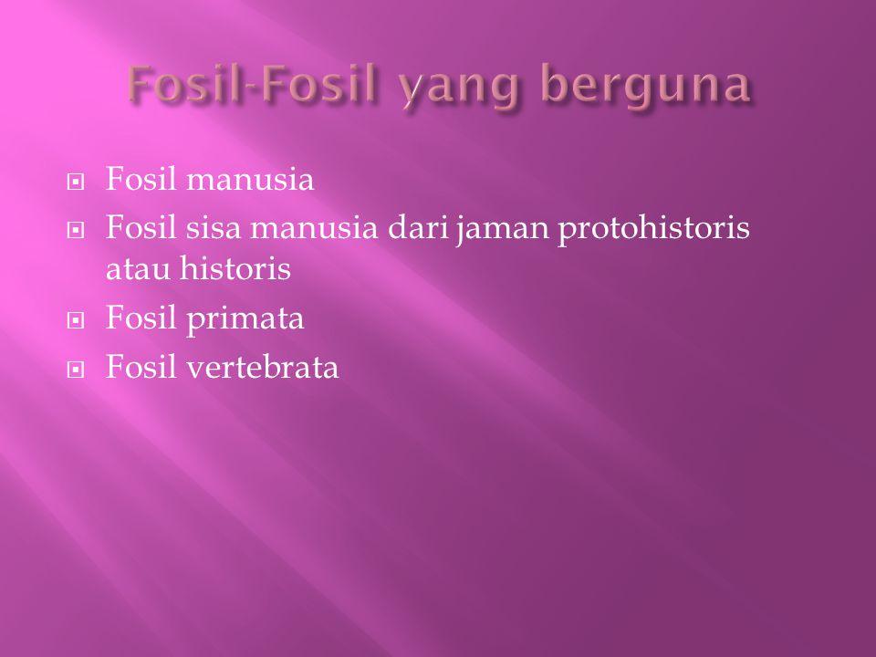  Fosil manusia  Fosil sisa manusia dari jaman protohistoris atau historis  Fosil primata  Fosil vertebrata
