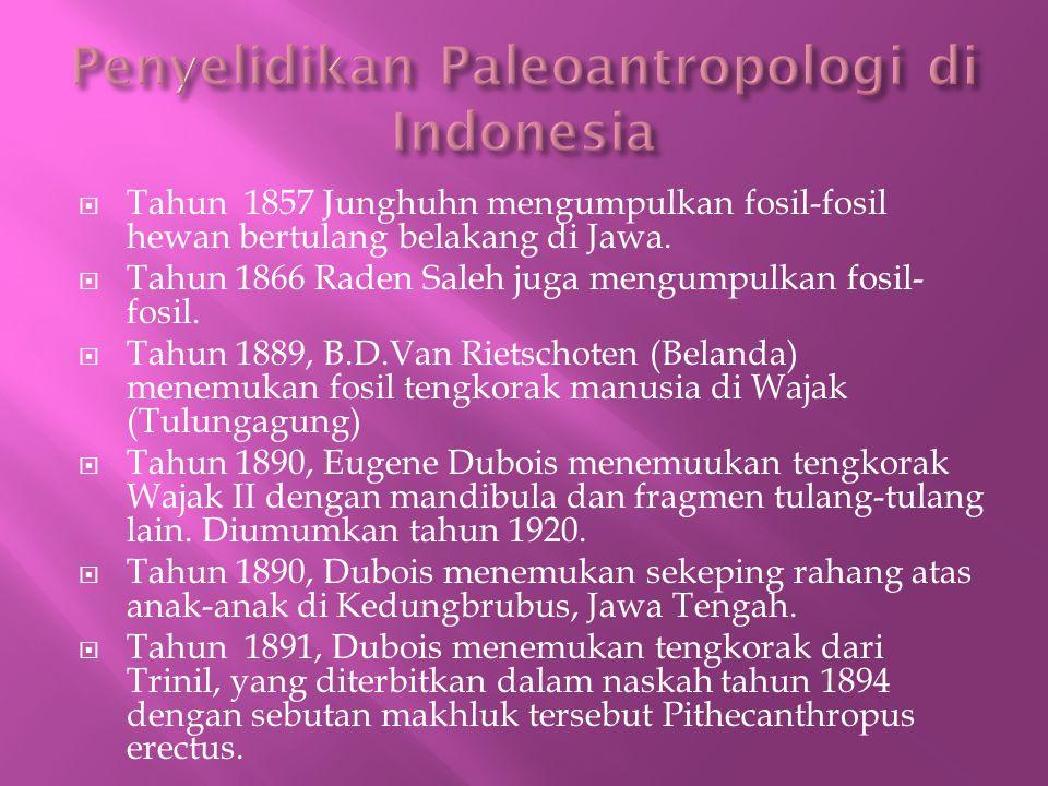  Tahun 1857 Junghuhn mengumpulkan fosil-fosil hewan bertulang belakang di Jawa.