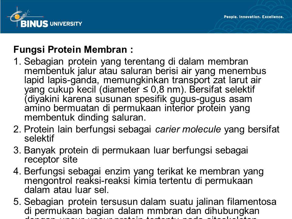 Fungsi Protein Membran : 1. Sebagian protein yang terentang di dalam membran membentuk jalur atau saluran berisi air yang menembus lapid lapis-ganda,