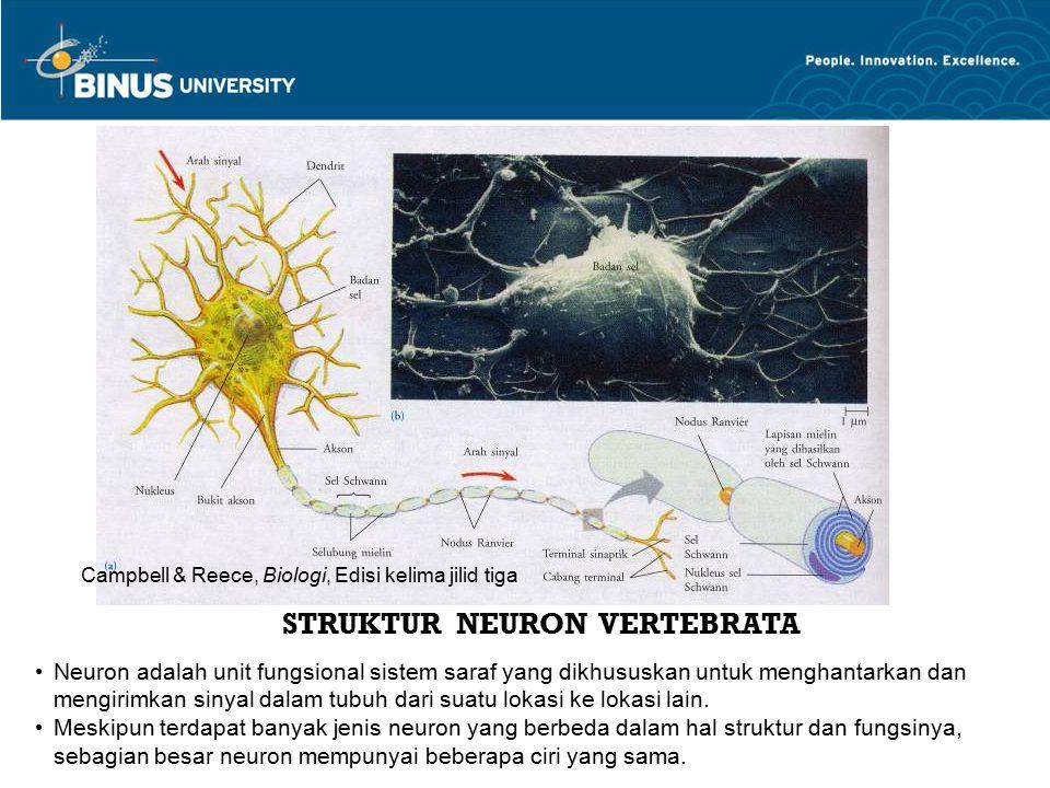 STRUKTUR NEURON VERTEBRATA Neuron adalah unit fungsional sistem saraf yang dikhususkan untuk menghantarkan dan mengirimkan sinyal dalam tubuh dari sua