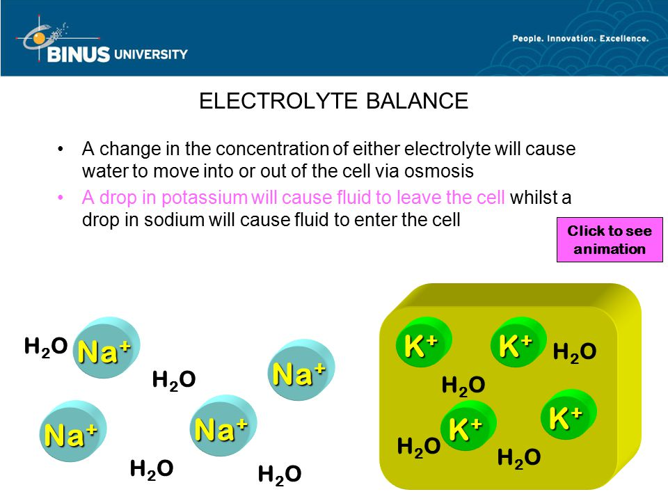 ELECTROLYTE BALANCE A change in the concentration of either electrolyte will cause water to move into or out of the cell via osmosis A drop in potassi
