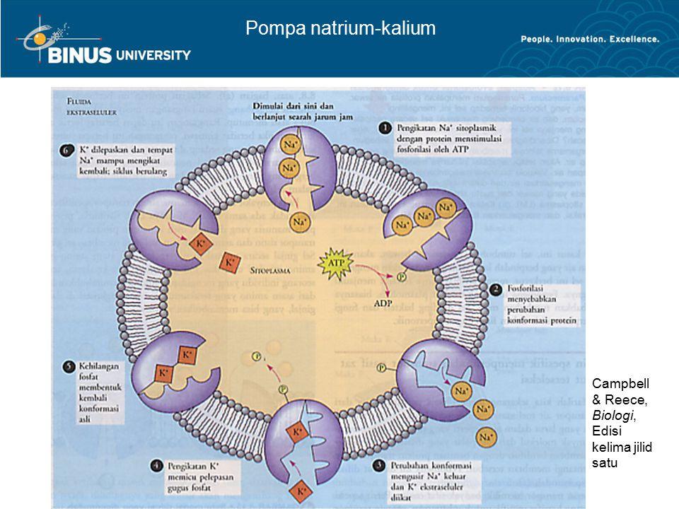Pompa natrium-kalium Campbell & Reece, Biologi, Edisi kelima jilid satu
