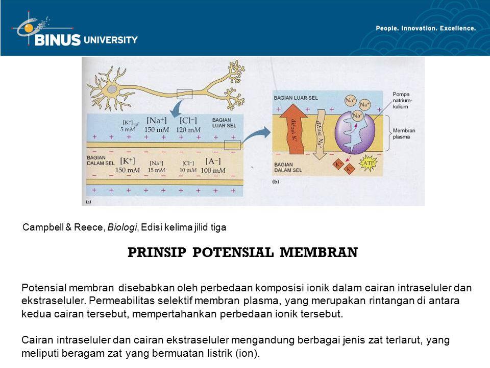 PRINSIP POTENSIAL MEMBRAN Potensial membran disebabkan oleh perbedaan komposisi ionik dalam cairan intraseluler dan ekstraseluler. Permeabilitas selek