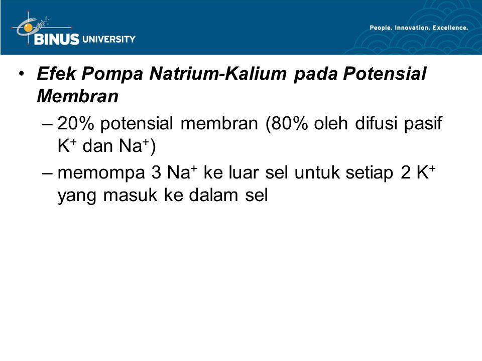 Efek Pompa Natrium-Kalium pada Potensial Membran –20% potensial membran (80% oleh difusi pasif K + dan Na + ) –memompa 3 Na + ke luar sel untuk setiap