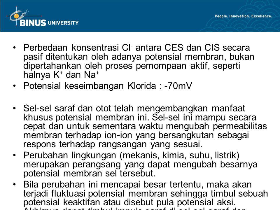 Perbedaan konsentrasi Cl - antara CES dan CIS secara pasif ditentukan oleh adanya potensial membran, bukan dipertahankan oleh proses pemompaan aktif,