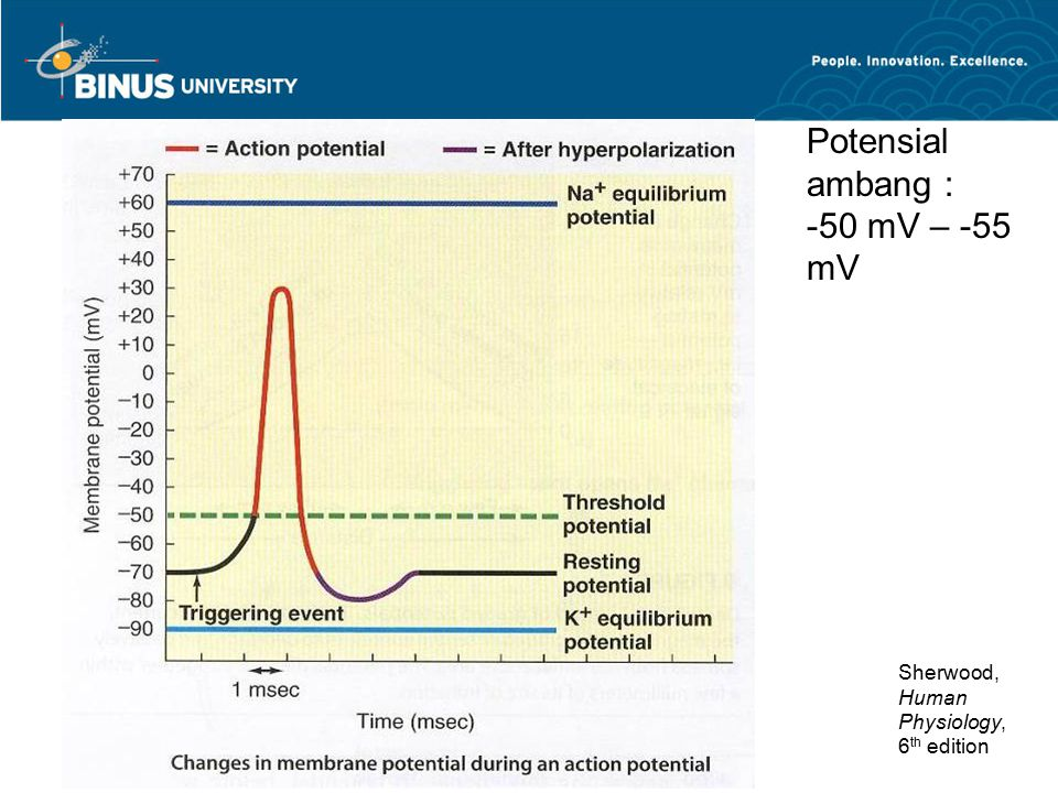 Sherwood, Human Physiology, 6 th edition Potensial ambang : -50 mV – -55 mV