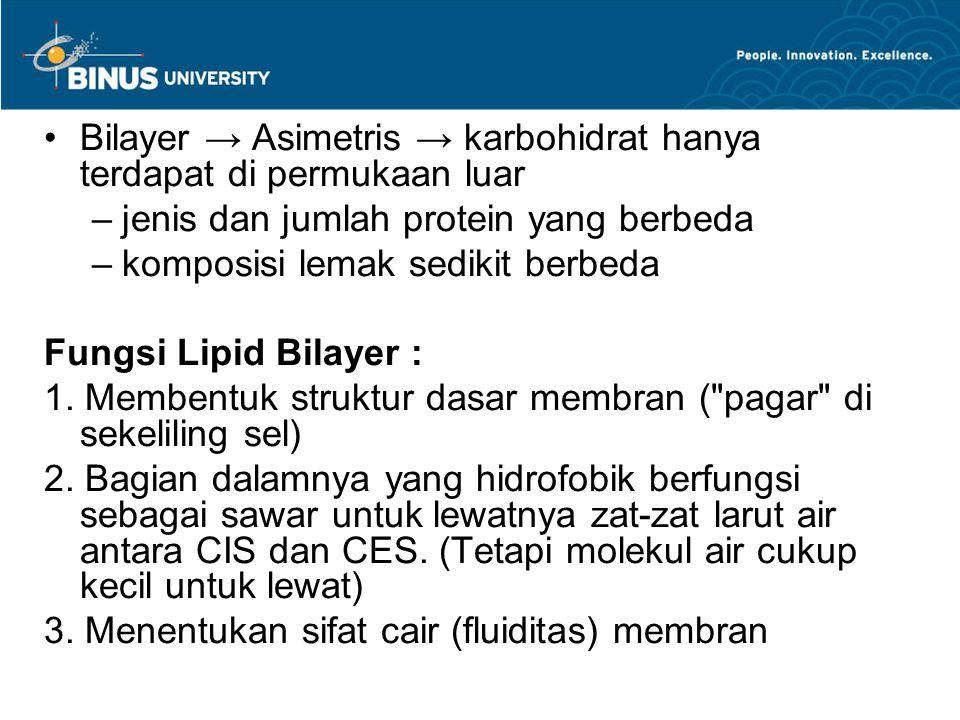 Bilayer → Asimetris → karbohidrat hanya terdapat di permukaan luar –jenis dan jumlah protein yang berbeda –komposisi lemak sedikit berbeda Fungsi Lipi