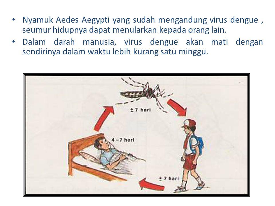Nyamuk Aedes Aegypti yang sudah mengandung virus dengue, seumur hidupnya dapat menularkan kepada orang lain. Dalam darah manusia, virus dengue akan ma