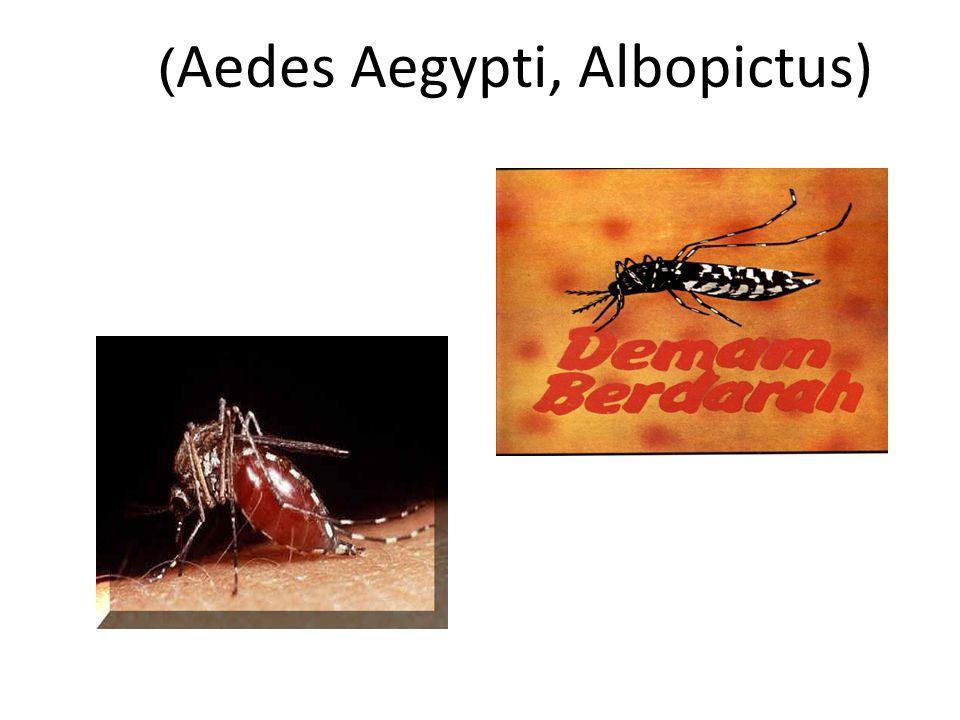 ( Aedes Aegypti, Albopictus)