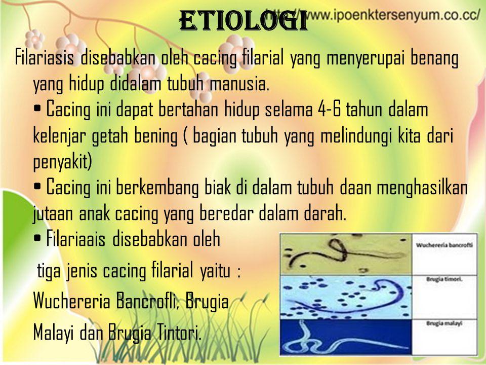 Etiologi Filariasis disebabkan oleh cacing filarial yang menyerupai benang yang hidup didalam tubuh manusia. Cacing ini dapat bertahan hidup selama 4-