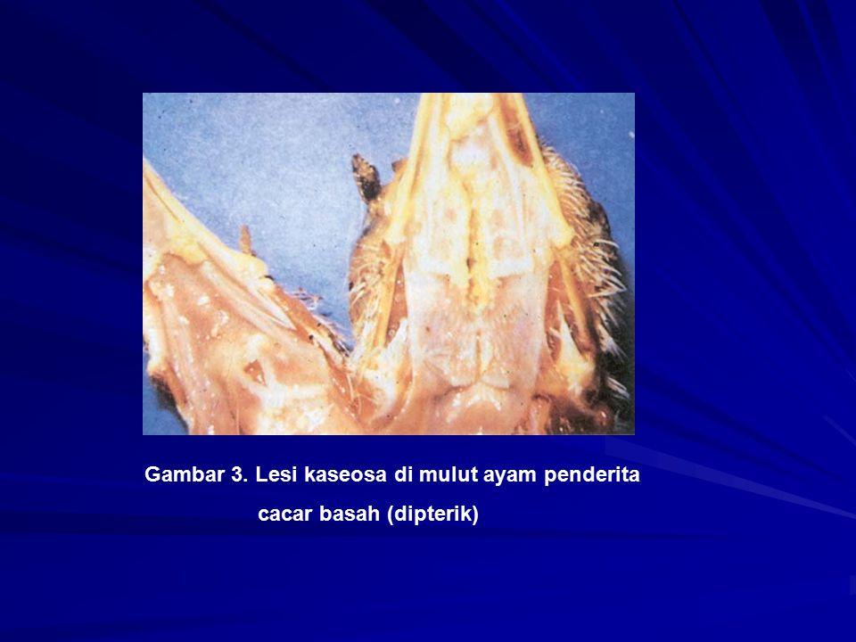 Gambar 3. Lesi kaseosa di mulut ayam penderita cacar basah (dipterik)