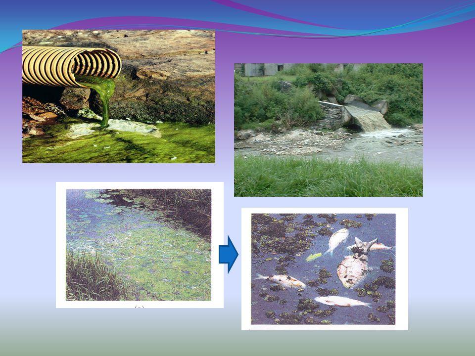 Jenis polutanSumber utama Bahan kimia anorganik Senyawa asamPertambangan, limbah industri, pengendapan asam Garam-garamanIrigasi pertanian, pertambangan, limbah industri, ladang minyak, aliran buangan dari perkotaan TimbalBahan bakar yang mengandung timbal, beberapa pestisida, peleburan timbal MerkuriLimbah industri, fungisida Nutrien tumbuhan (fosfat dan nitrat) Aliran dari pertanian, pertambangan, limbah rumah tangga, limbah industri, air limbah yang tidak terolah dengan baik, industri pengolahan makanan, fosfat yang terkandung dalam deterjen SedimenErosi tanah, aliran dari pertanian, pertambangan, hutan, dan kegiatan pembangunan (konstruksi) Bahan radioaktifBatuan, tambang uranium, pembangkit tenaga nuklir, pengujian senjata nuklir PanasAir pendingin dari industri dan pusat pembangkit listrik Sumber polusi air