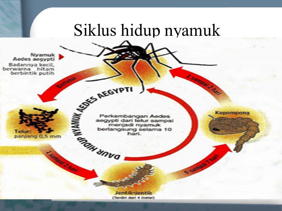 Siklus hidup nyamuk