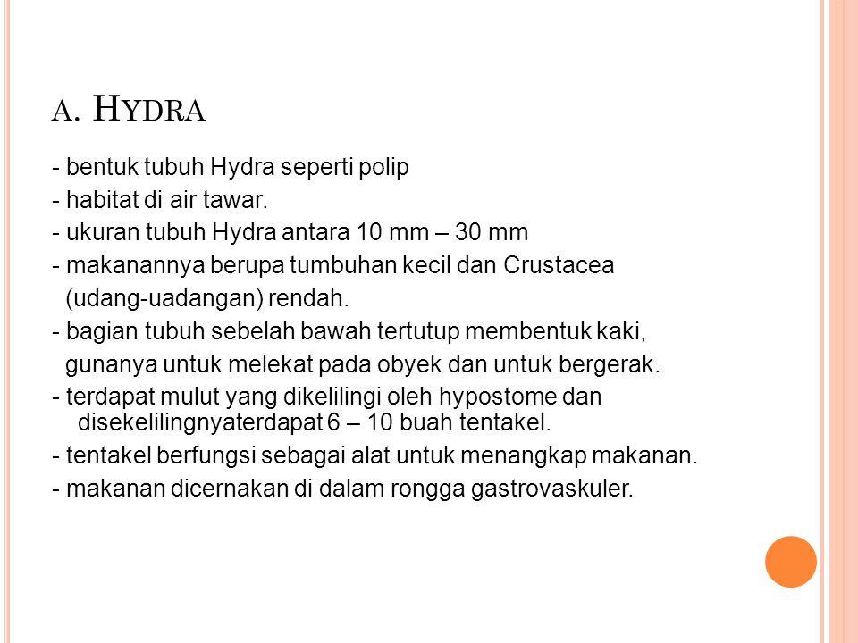 A. H YDRA - bentuk tubuh Hydra seperti polip - habitat di air tawar. - ukuran tubuh Hydra antara 10 mm – 30 mm - makanannya berupa tumbuhan kecil dan