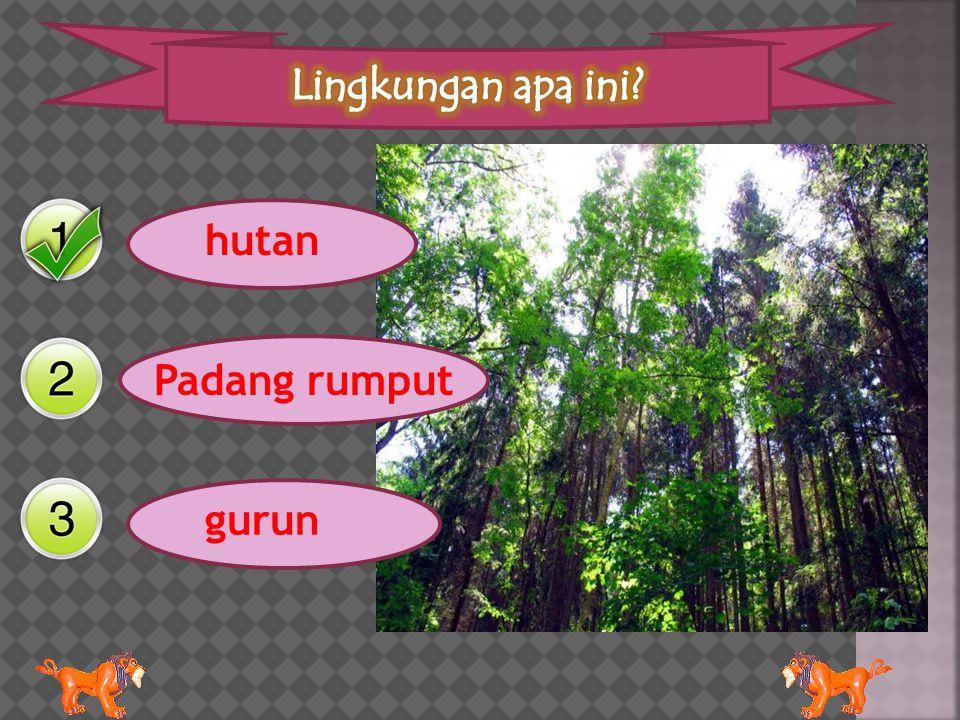 hutan Padang rumput gurun
